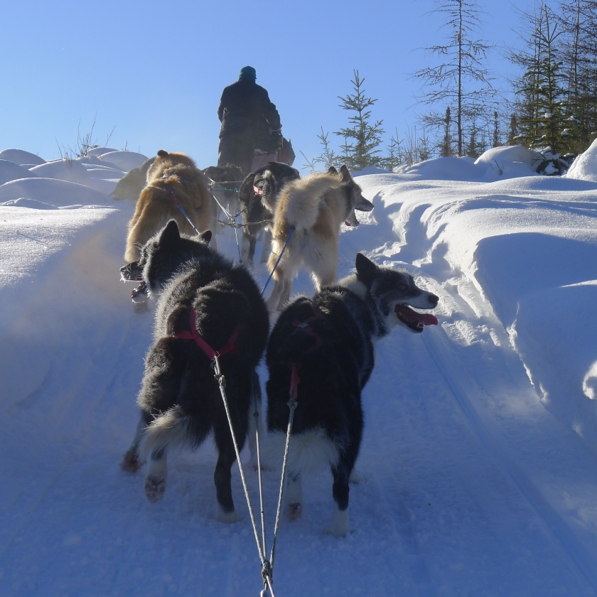 Mushing Team
