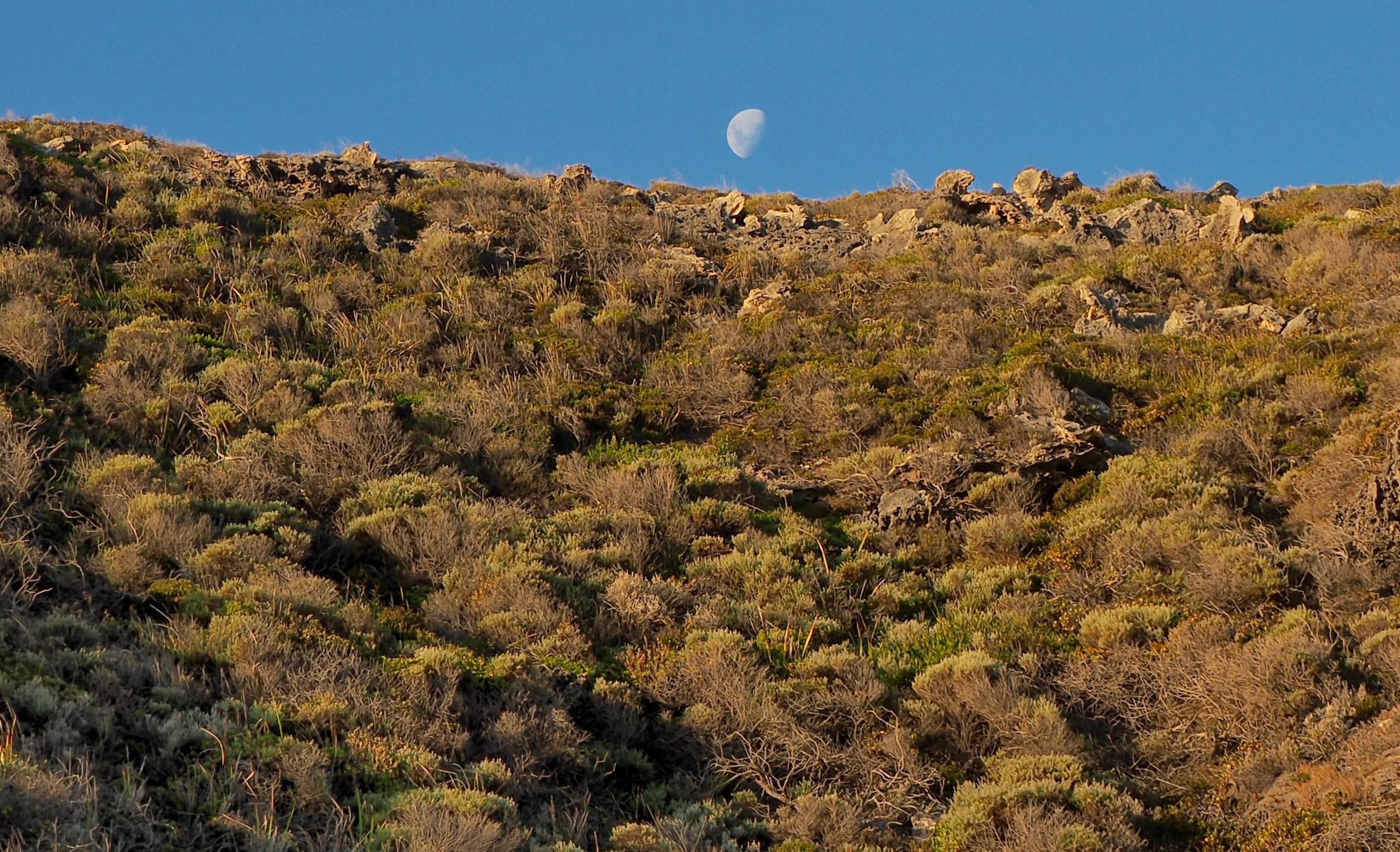 Drought resistant low rainfall desert shrubs.